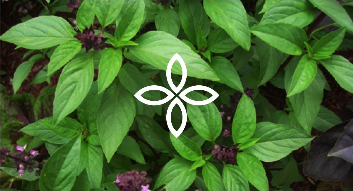 Thiết kế logo thương hiệu Thiết bị y tế Bình Nguyên Medical 1